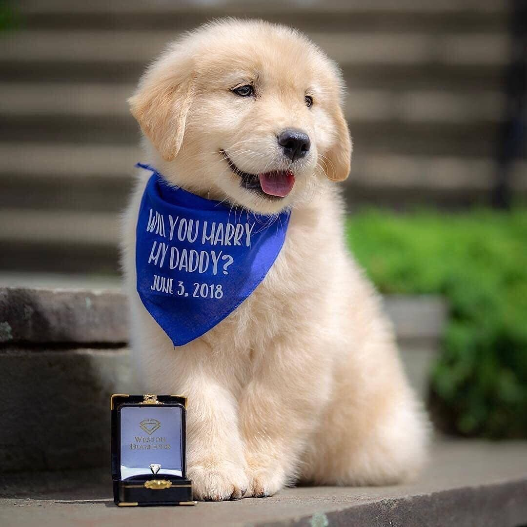 Proposal Shesaidyes Goodboy Dogfashion Dogswithjobs