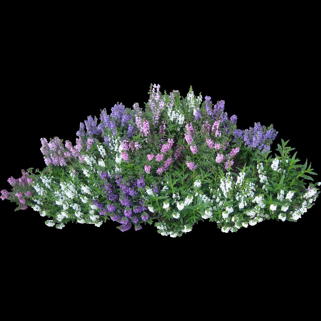 Flower garden clip art free png for Flowering landscape bushes