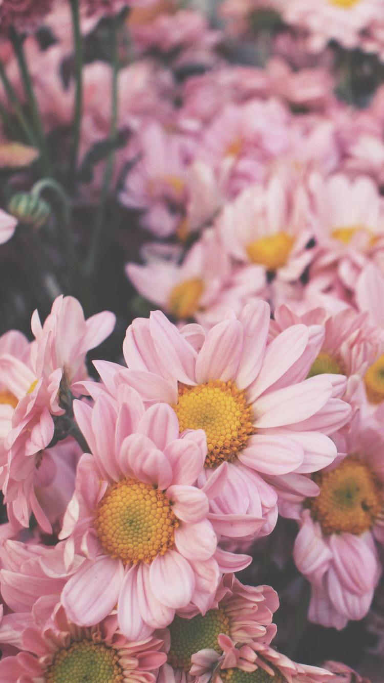 Iphone wallpaper tumblr flower - Ultra Hd Wallpaper Flower K Nature Flower Garden Love Pink Hd