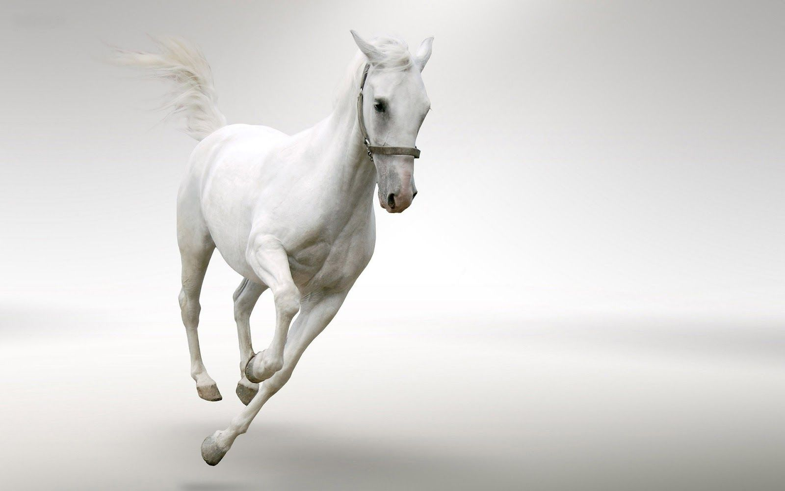 White Horses Running Through Water Or Sea White Horses Horses Horse Wallpaper