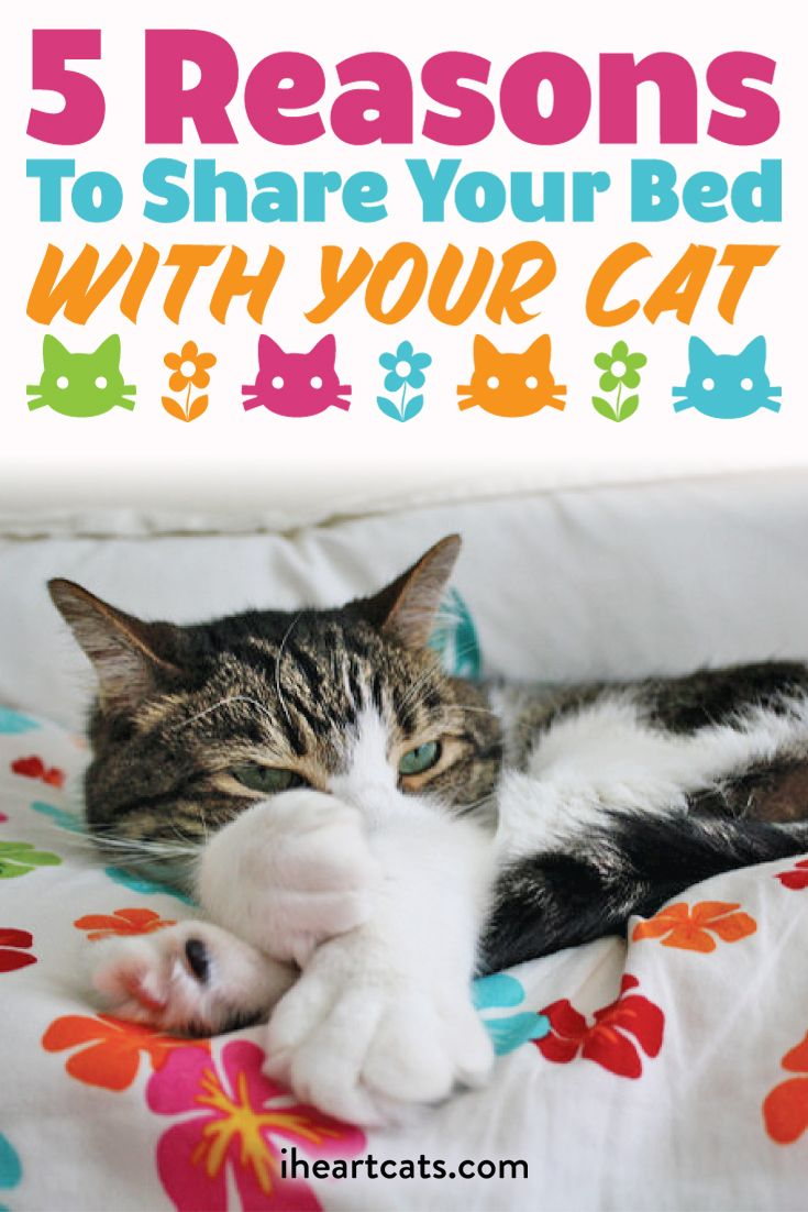 5 Reasons To Share Your Bed With Your Cat Cats Pet Care Cats Cute Cats And Kittens