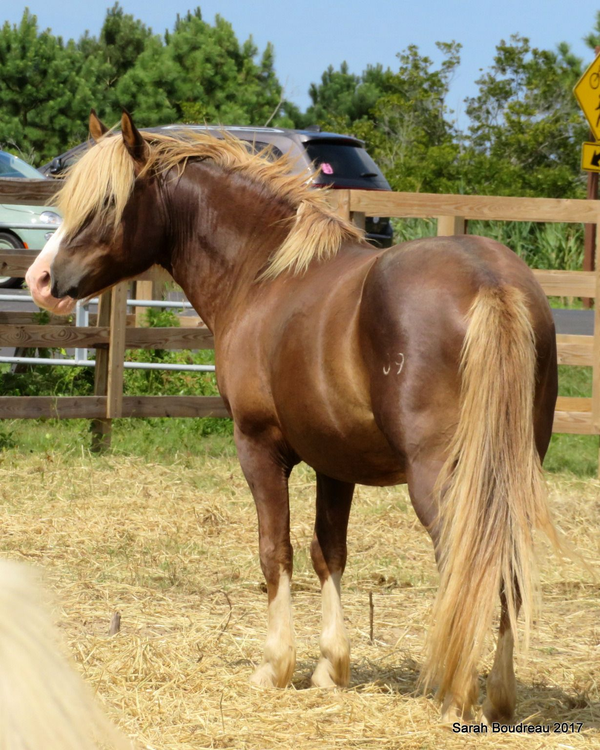 Imperatore horse vans for sale - Unnatural Horsemanship Riptide Wild Chincoteague Pony Stallion Handsome Guy
