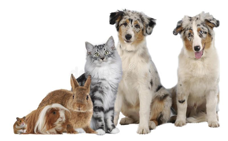 Group Of Different Pets Different Pets Sitting Together Isolated Ad Pets Group Isolated Sitting Ad Pets Photo Photo Grouping