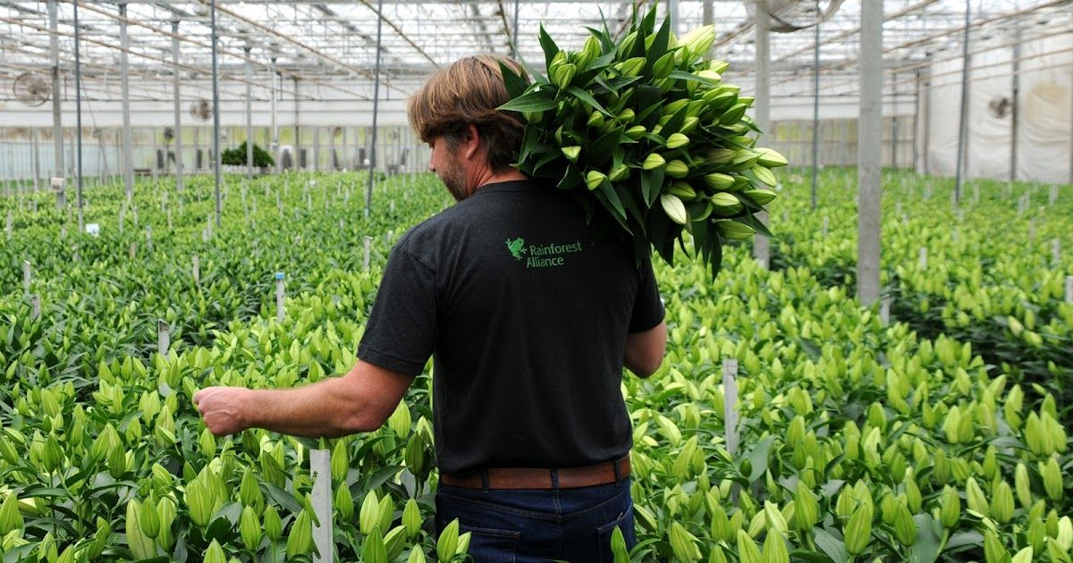 Picking Lilies At Sun Valley Floral Farms With Images Growing
