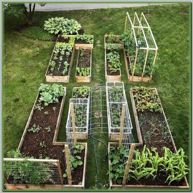 5 Vertical Vegetable Garden Ideas For Beginners: 5 Tips For Living Off The Grid