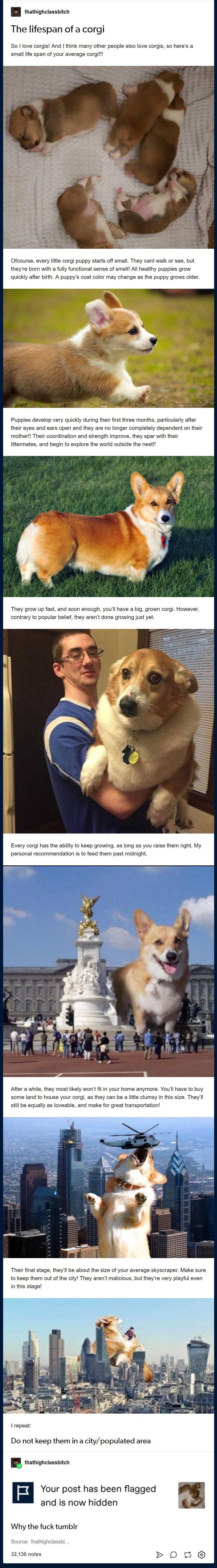 26 Tremendous Tumblr Posts That Are Shining On Internet Animals