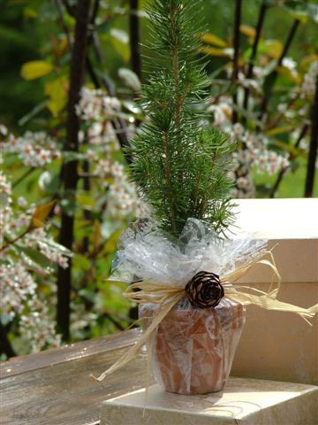 Pin By Grace Kohn On Interior Gardening Wedding Wedding Favours