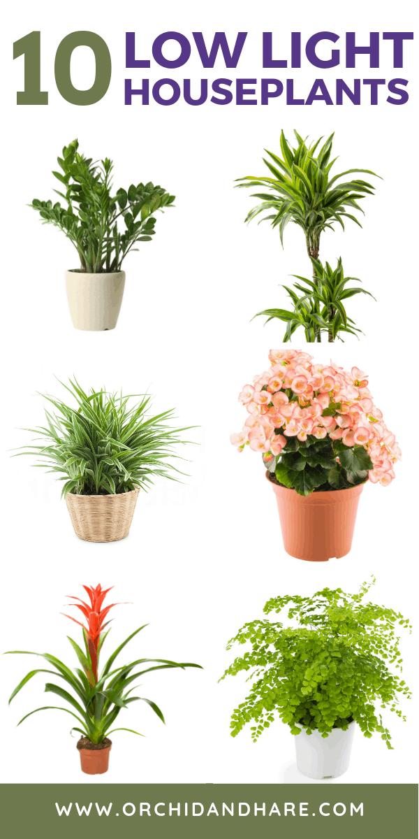 10 Low Light House Plants Low Light Plants Indoor Plants Low