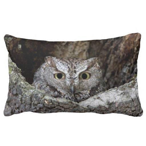 >>>best recommended          Western Screech Owl Pillows           Western Screech Owl Pillows so please read the important details before your purchasing anyway here is the best buyDeals          Western Screech Owl Pillows please follow the link to see fully reviews...Cleck Hot Deals >>> http://www.zazzle.com/western_screech_owl_pillows-189395800432222229?rf=238627982471231924&zbar=1&tc=terrest
