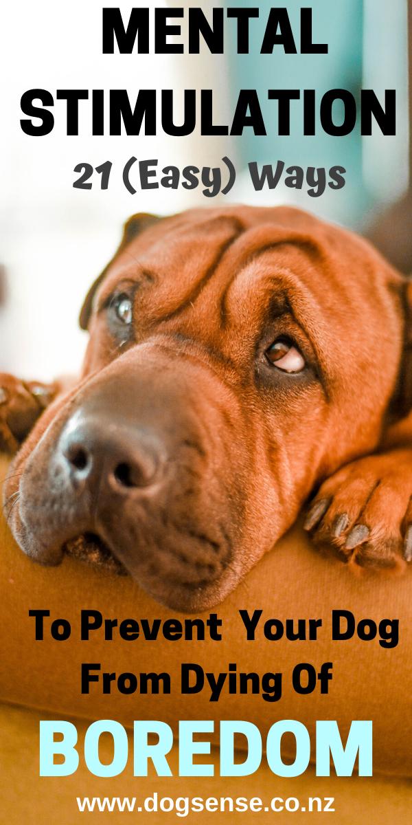 Mental Stimulation For Dogs. 21 Ways To Perk Him U