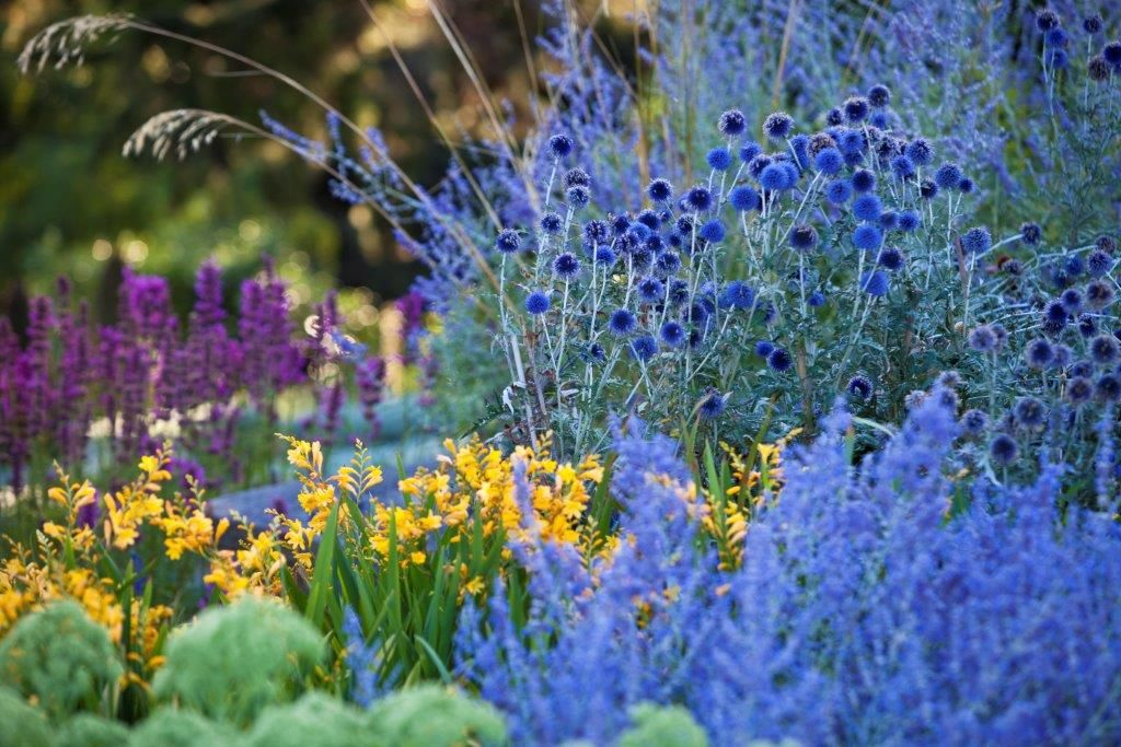 an amazing colour palette of perennials including agastache 39 aztec rose 39 crocosmia 39 citronella. Black Bedroom Furniture Sets. Home Design Ideas