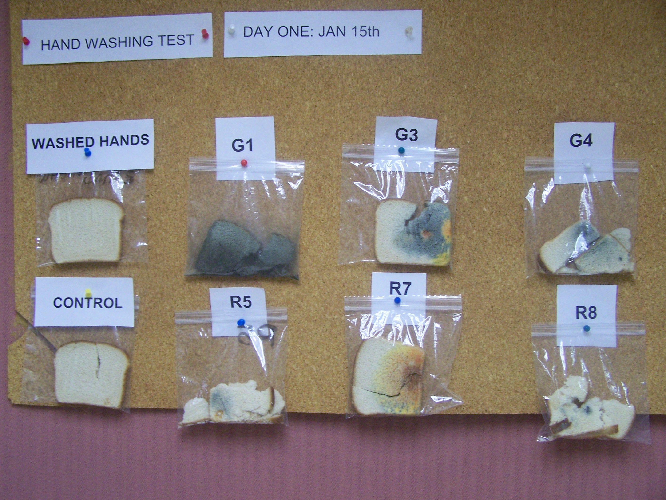 Science Facs Health This Is A Hand Washing Experiment For