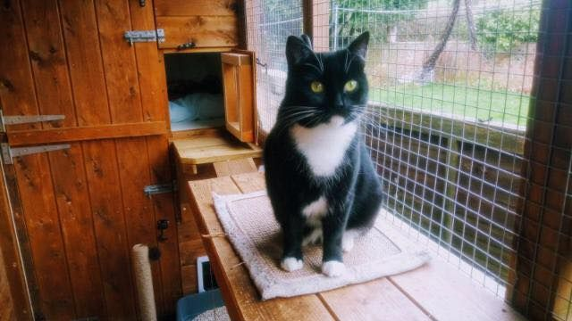 New Year Cat Homing Show Sunday 7th January