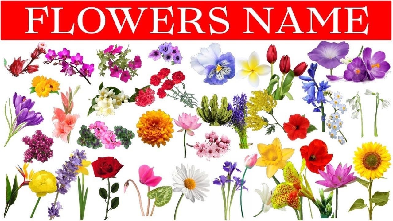 Flowers Name In Hindi & English With Pictures Phoolon Ke