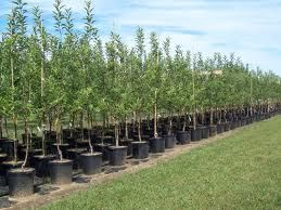 Listing Of Fruit Tree Nurseries In Ontario
