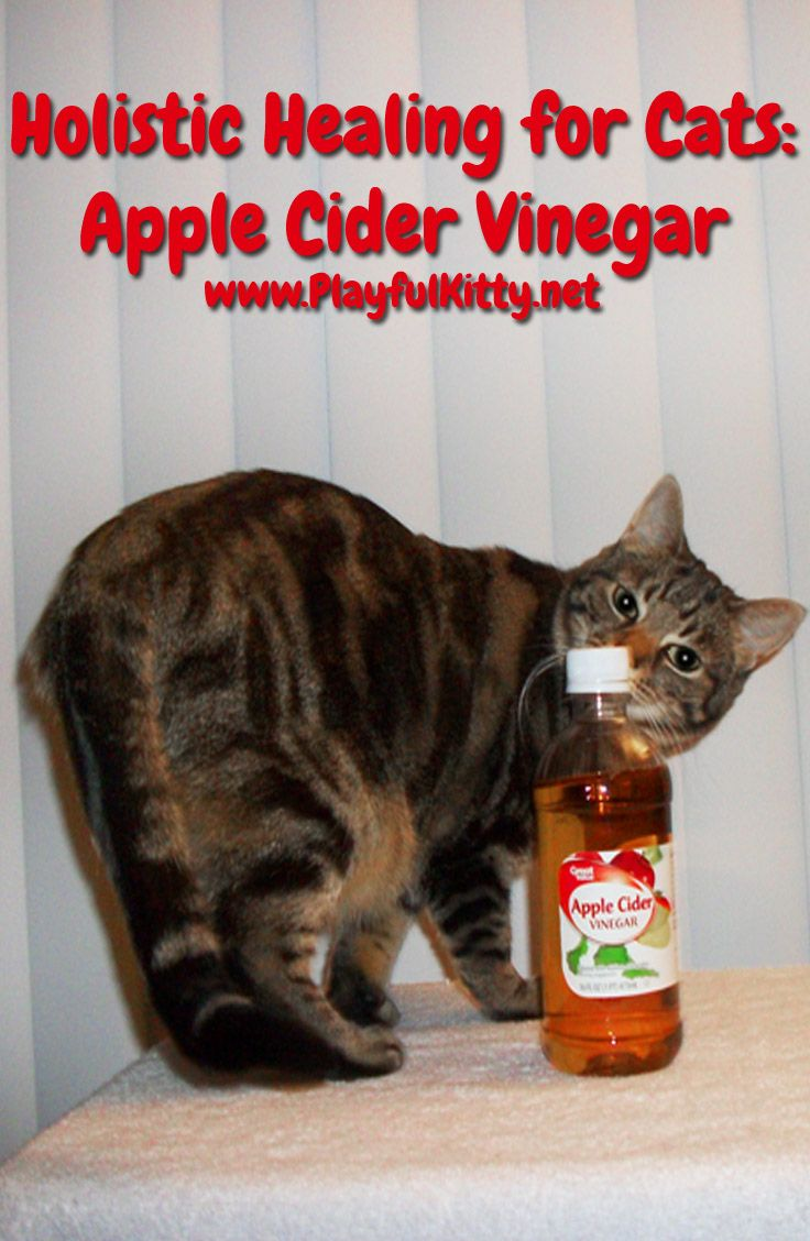 Looking For A Natural Way To Help Your Kitty Apple Cider Vinegar