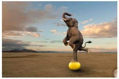 """Skilled Elephant Balancing On A Ball"" - Photography By: John Lund - [http://www.gettyimages.com]"