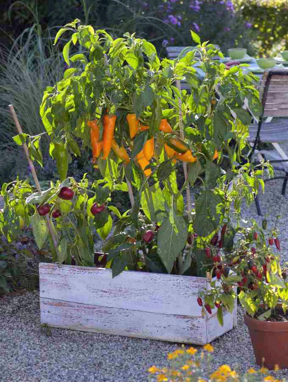 Gemuse Fur Hochbeete Diese Sorten Eignen Sich Am Besten Bepflanzung Hochbeet Garten Pflanzen