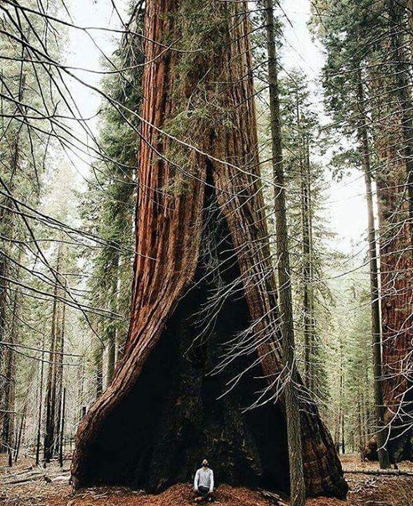 Squoia National Park California  Amazing creation of #ALLAH  Do you have good naturel photos ?  Send me - http://bit.ly/1FcEBVz -