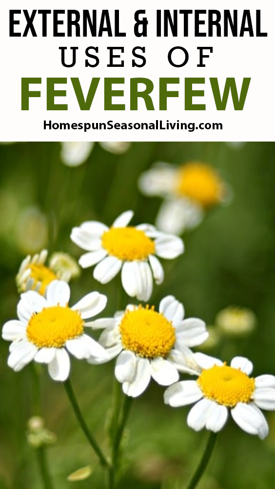 External Internal Uses Of Feverfew In 2020 Feverfew Essential Oils For Headaches Natural Home Remedies