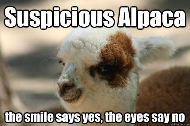 Suspicious Alpaca Alpaca Funny