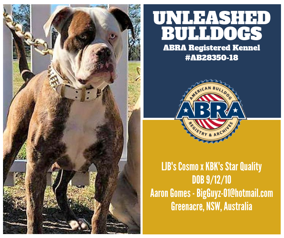 Abra Litter Of The Day Congratulations Aaron Unleashed Bulldogs