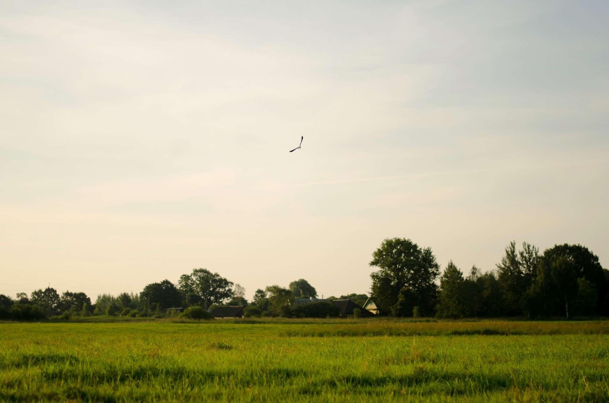 #agriculture #bird #countryside #environment #farm #farmland #field #grass #grassland #meadow #outdoor #rural #sky