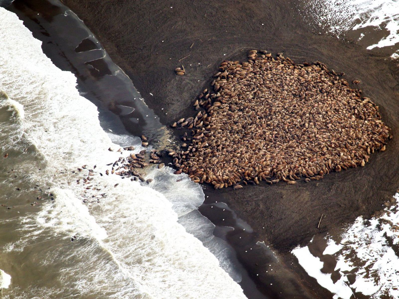 <p>This striking image sheds light on yet another disturbing toll that climate change is taking on our planet's wildlife.</p>