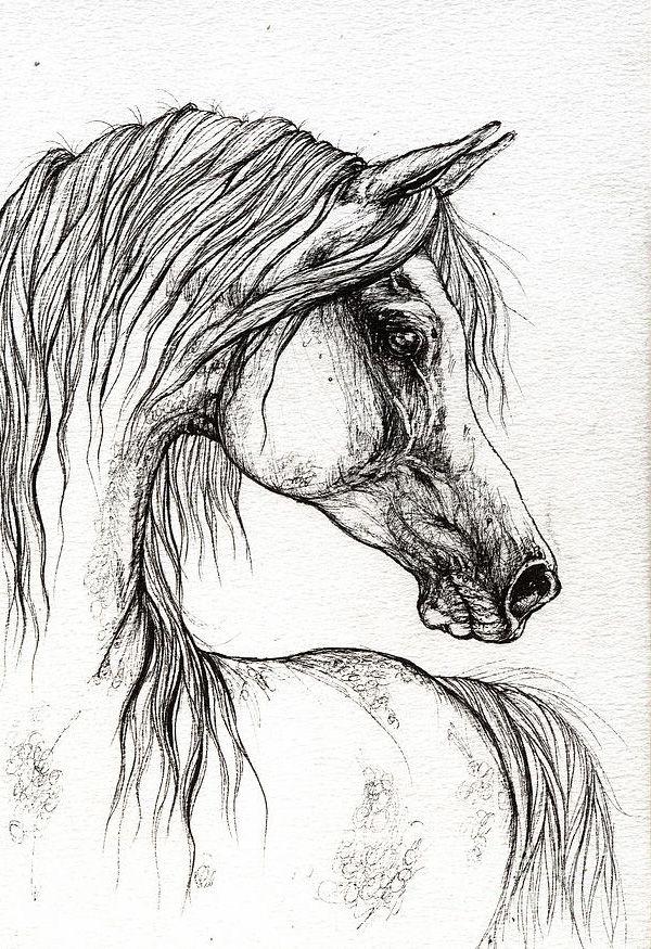 Cute Arabian Horse Head Drawing - Wallpaper Horse ...