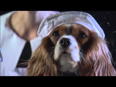The Dogs of Titanic