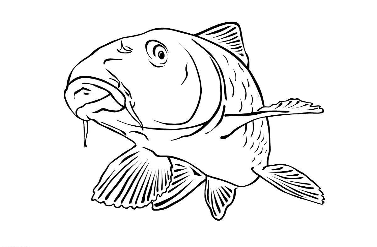 Ausmalbilder Malvorlagen Karpfen Kostenlos Zum Ausdrucken Marchen Aus Aller Welt Der Bruder Grimm Von An Fisch Zeichnung Lustige Malvorlagen Malvorlagen