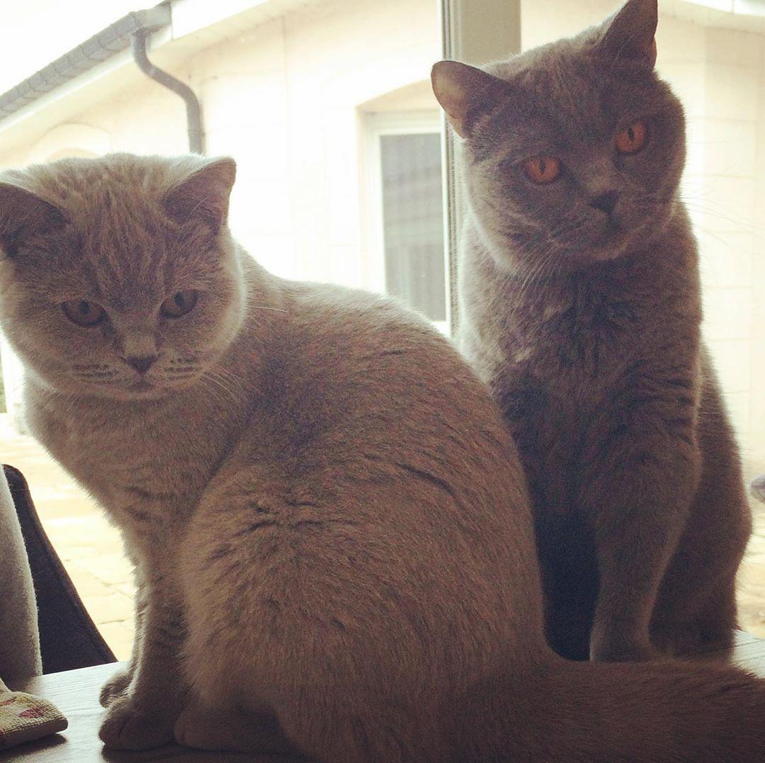 Greys and Mia