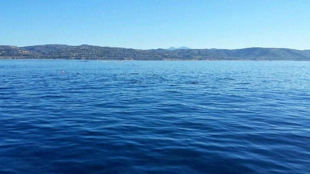 Hitting Hemlines: Newport Beach, CA 2015