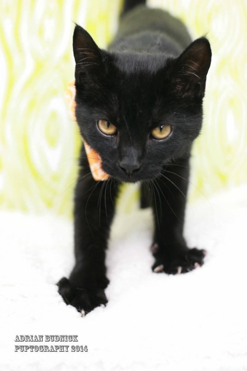 Adopt MIDNIGHT on Petfinder Pet care, Dog adoption, Pets