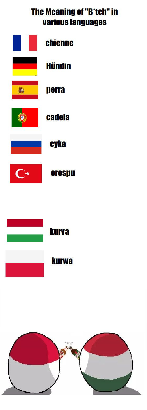 Me meaning of polish flag - Polish Memes Dog In French Jokes Humor Training Cloth Funny Pictures Funny