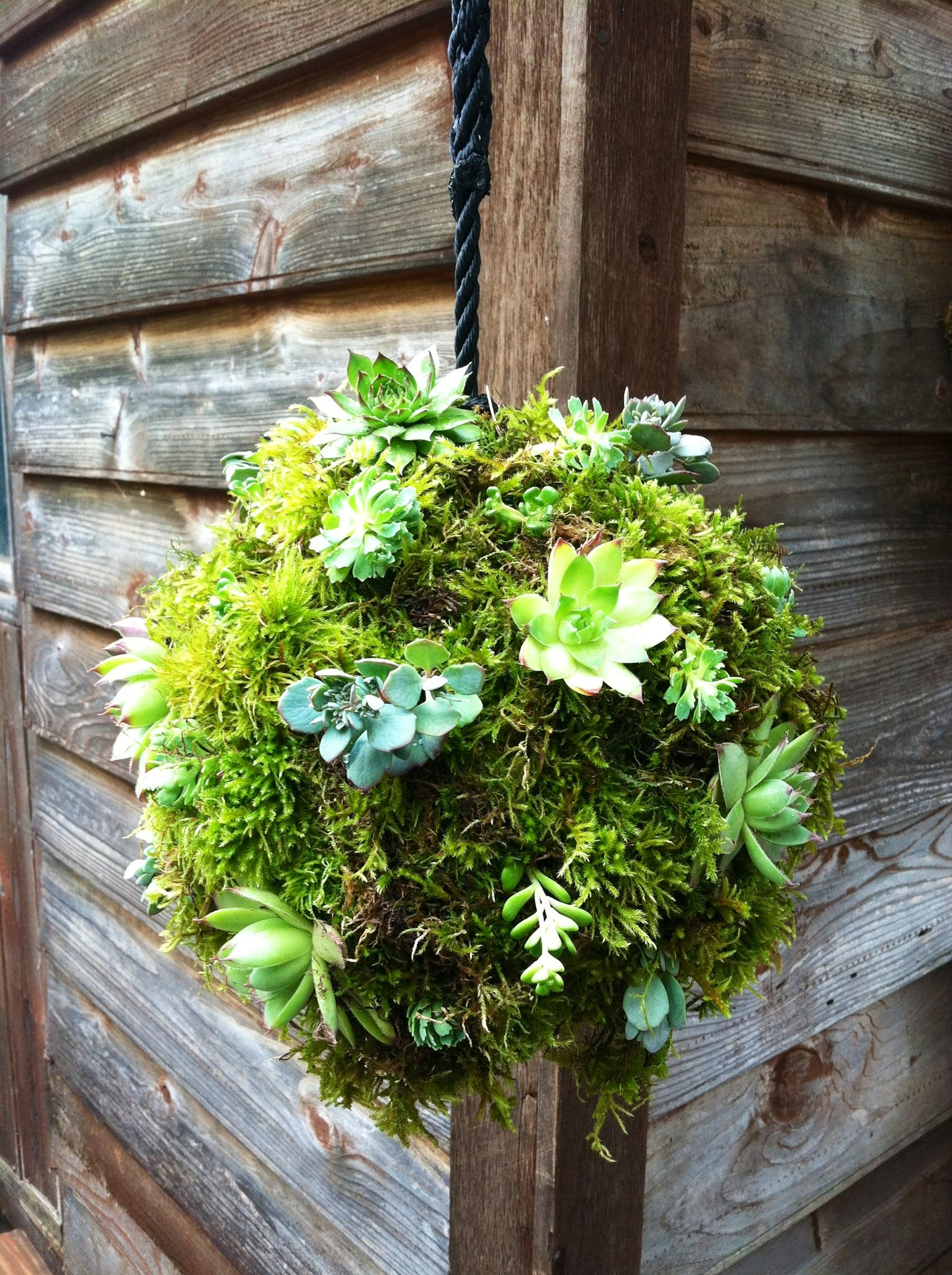 Hanging Moss Ball With Succulents