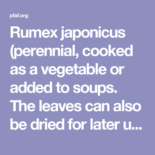 Rumex japonicus (perennial, cooked as a vegetable or added to soups. The leaves can also be dried for later use)