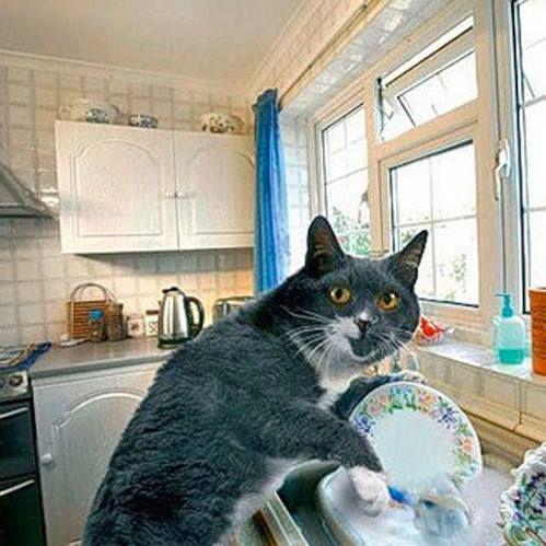 Gatitos Cats Cute Cat Memes Funny Animals