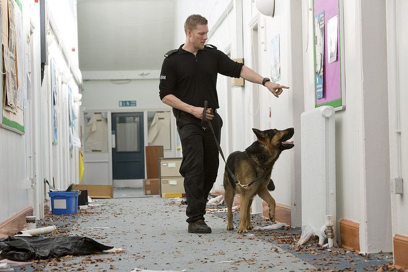 Banjo On The Search German Shepherd Training Manchester Police