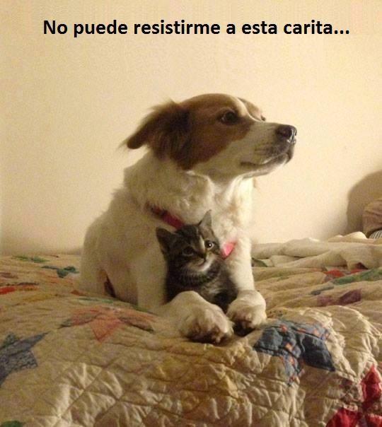 11755880 1172820549400571 1007122095405125484 N Jpg 523 960 Memes Nuevos Memes Chistosos Para Facebook Memes