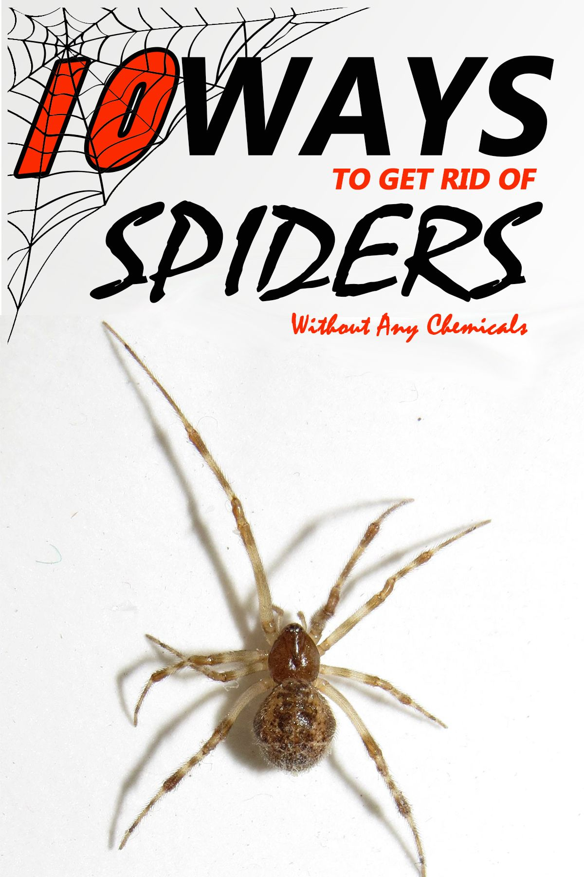 10 Ways to Rid Spiders For Good Without Any Chemicals in
