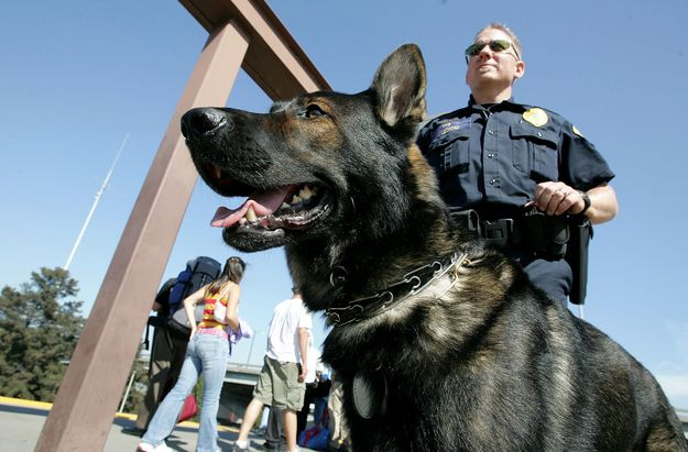 This Is Andy A Bomb Sniffing Dog Who Patrols The Bart In Oakland