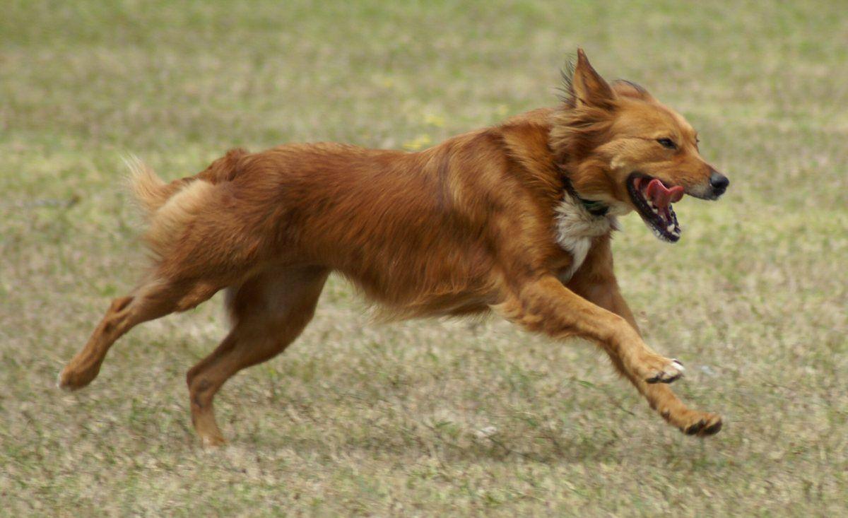 картинки бегущей собаки с боку дополнение смене