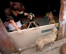Surge of Compassion: Chinese animal activists confront the dog meat trade in a growing movement that's changing minds and saving lives | The Humane Society of the United States