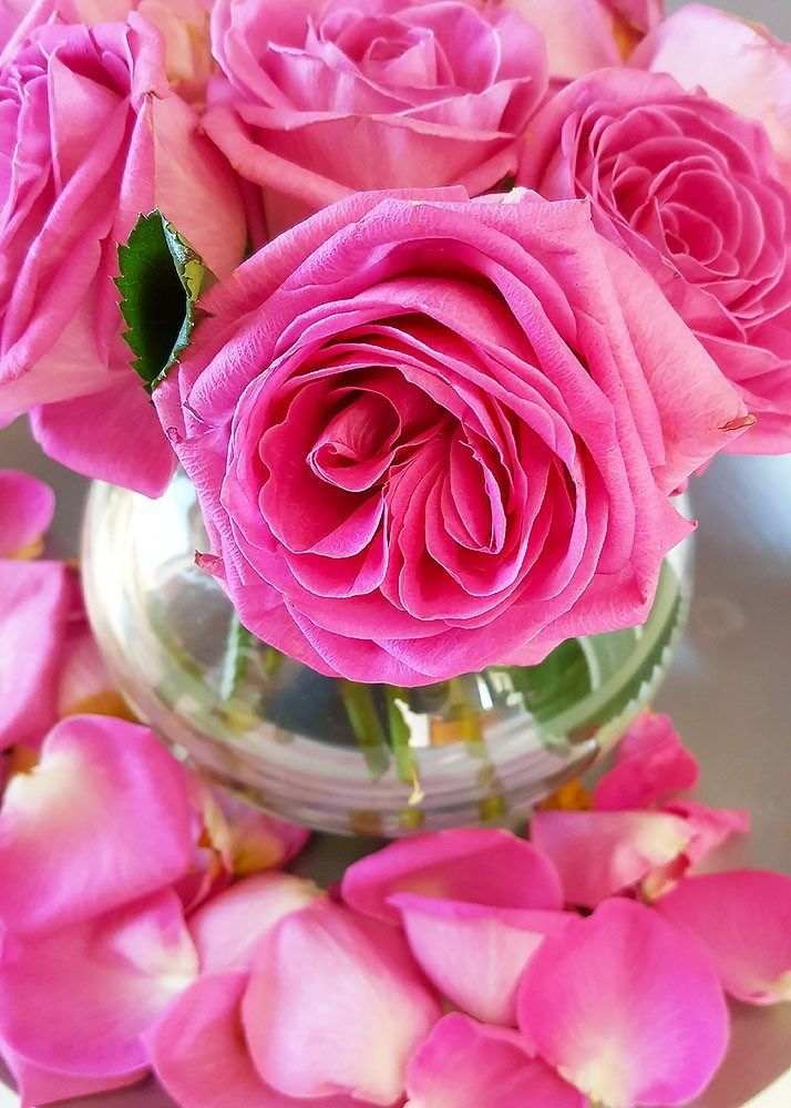 3 tips to keep your flowers fresh | Flowers, Flower ...