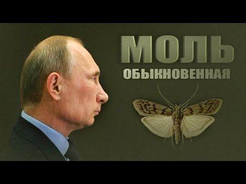 """Путін вимагає від США офіційно передати дані про втручання РФ у вибори: """"Дайте нам матеріали"""" - Цензор.НЕТ 971"""