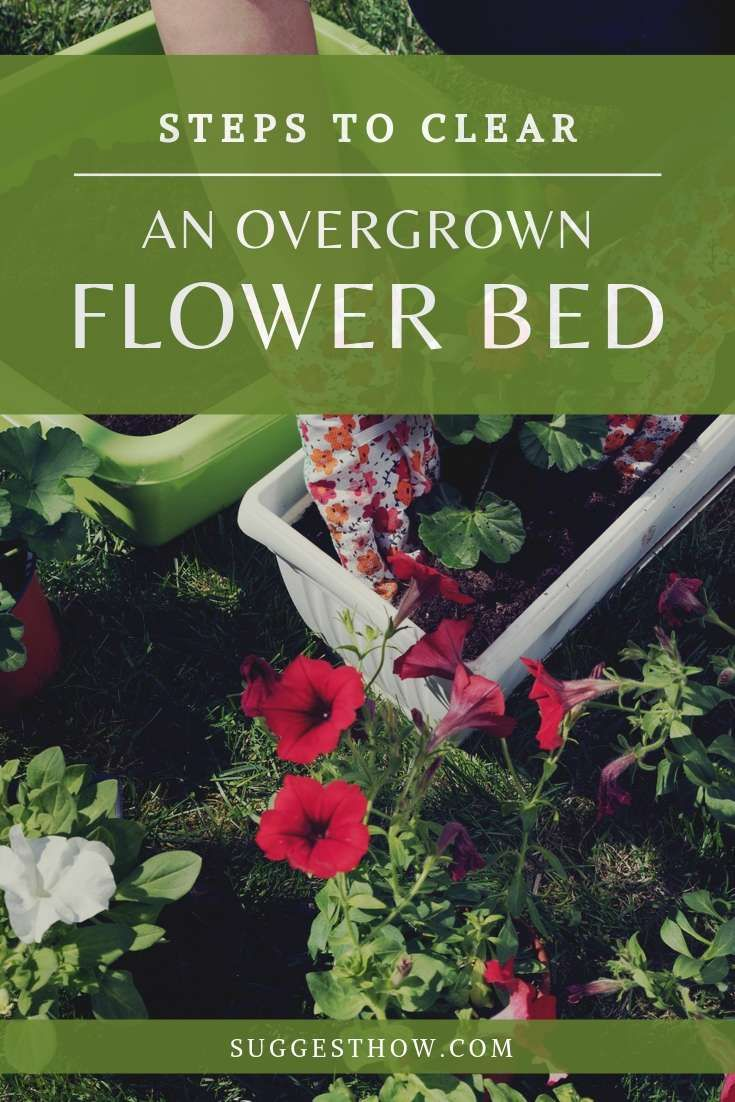 How to clear an overgrown flower bed flower beds how to