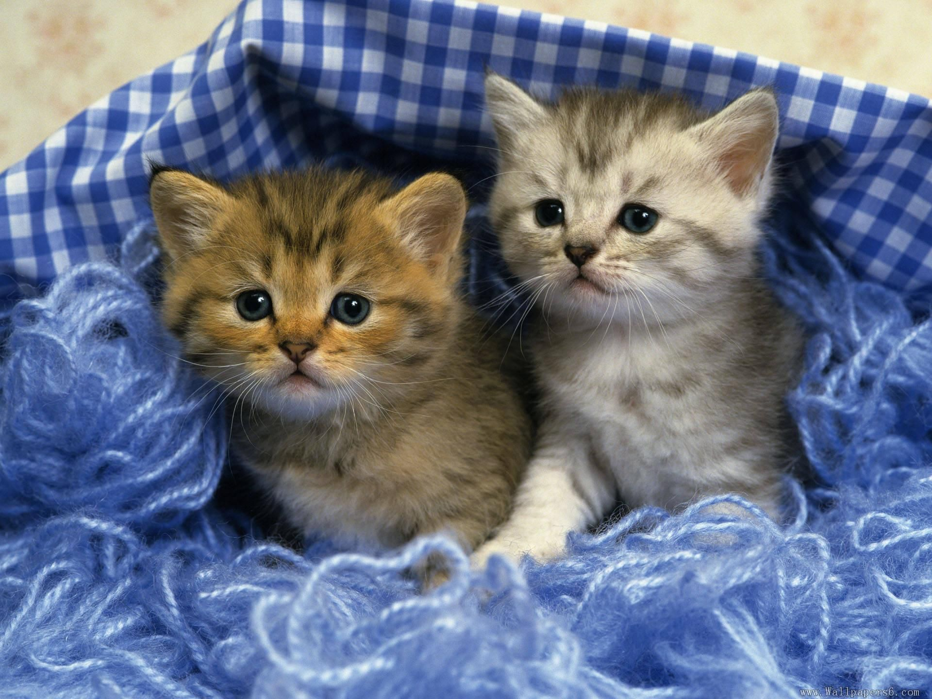 Kitten Wallpaper 1920x1200 Pictures Of Cute Kittens Wallpapers 68