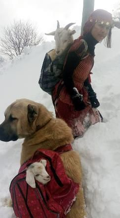 Black Sea region of Turkey 11 year old girl with dog mother goat and newborn baby goat