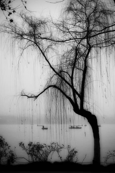 bare willow | Willow tree tattoos, Black, white tree, Tree ...Weeping Willow Black And White Tattoo